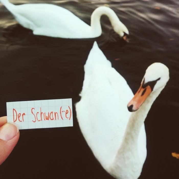 der Schwan - Swan