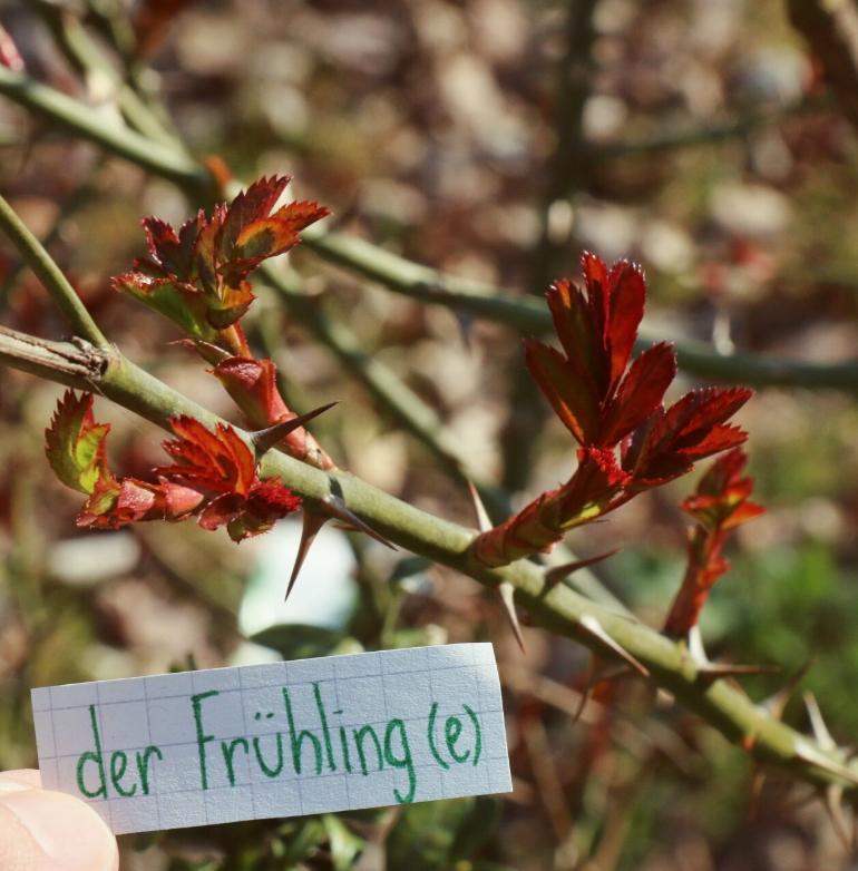 der Frühling - Spring