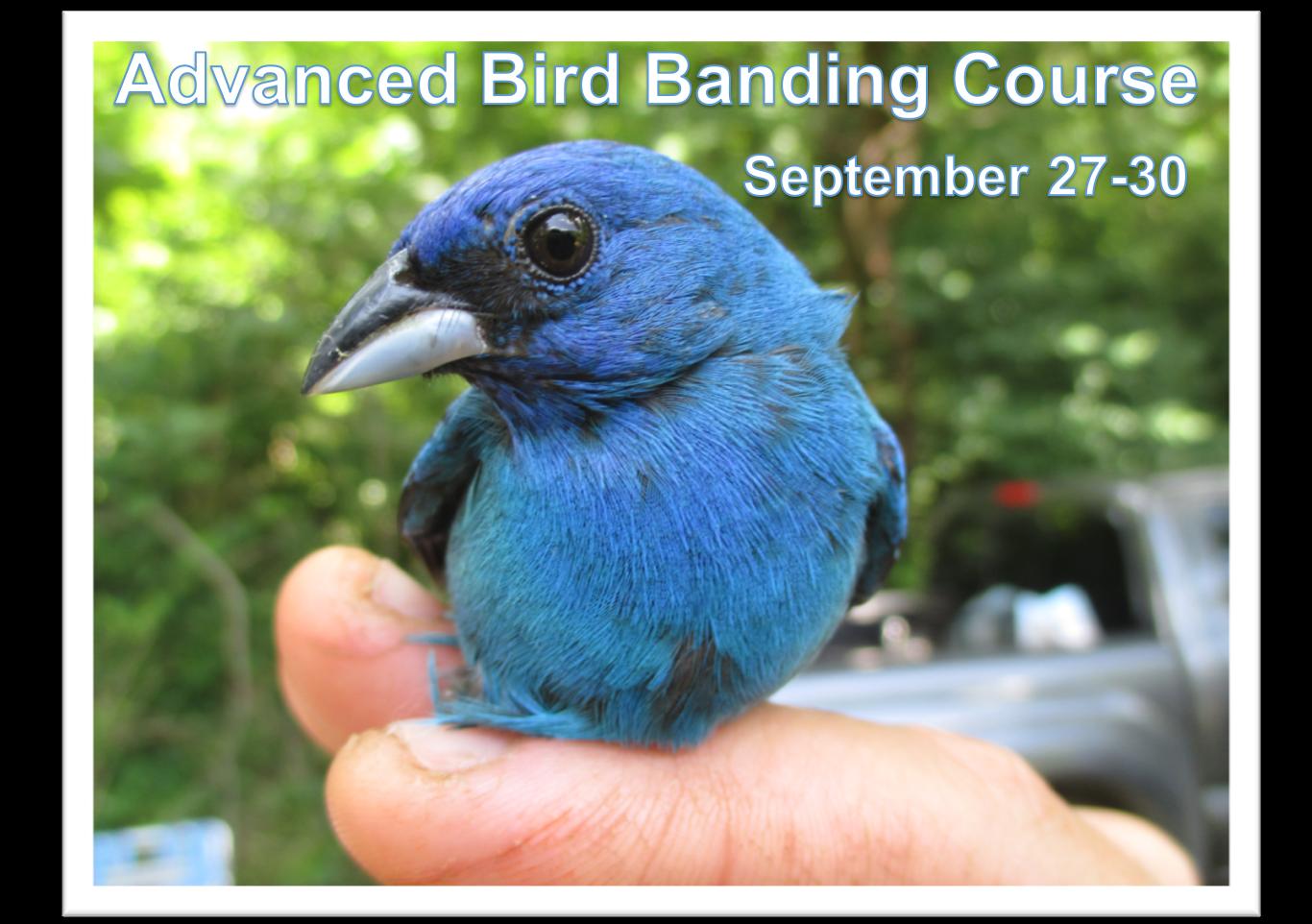 Advanced Bird Banding Course.png
