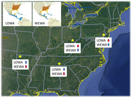 Figure 1. Study locations (gold stars) where individuals from the two species were marked with geolcoators. Arrow next to species abbreviations indicate increasing (blue up arrows) or decreasing (red down arrows) trends in abundance over the past 50 years. Insets in the upper left demonstrate the extensive overlap in breeding and non-breeding distributions for these species. (Figure from Dr. Henry Streby)