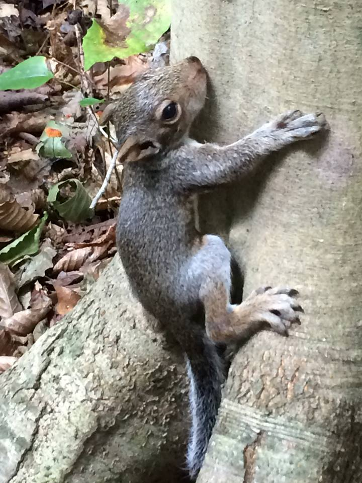 Baby squir.jpg