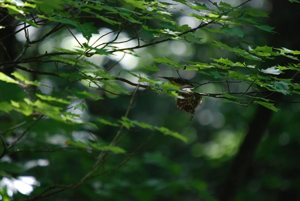 BHVI Nest.jpg