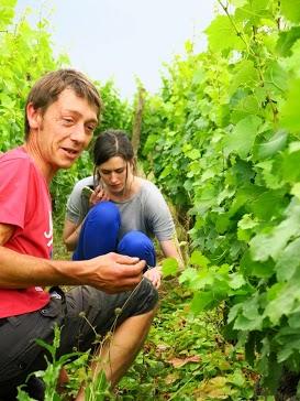 Picking Wild Strawberries with Julien Labet