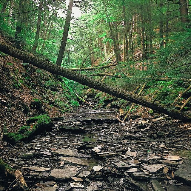 "The serene beauty of The Finger Lakes National Forest 🌳 encompasses a stunning 16,529 acres across Seneca and Schuyler counties and is the only national forest in New York State. It is the perfect place to ""lose oneself"" in the best way and offers 30 miles worth of hiking trails to do so. Find yourself here by only taking the Slow Roads: Route 14, 414, or 79. #fingerlakes #iloveny #ispyny #newyork #nys #newyorkstate #flx #senecalake #exploremore #wildernessculture #getoutside #nature #hiking #camping #neverstopexploring #environment #forest #beyondrochester #goatworthy #vsco #vscox"