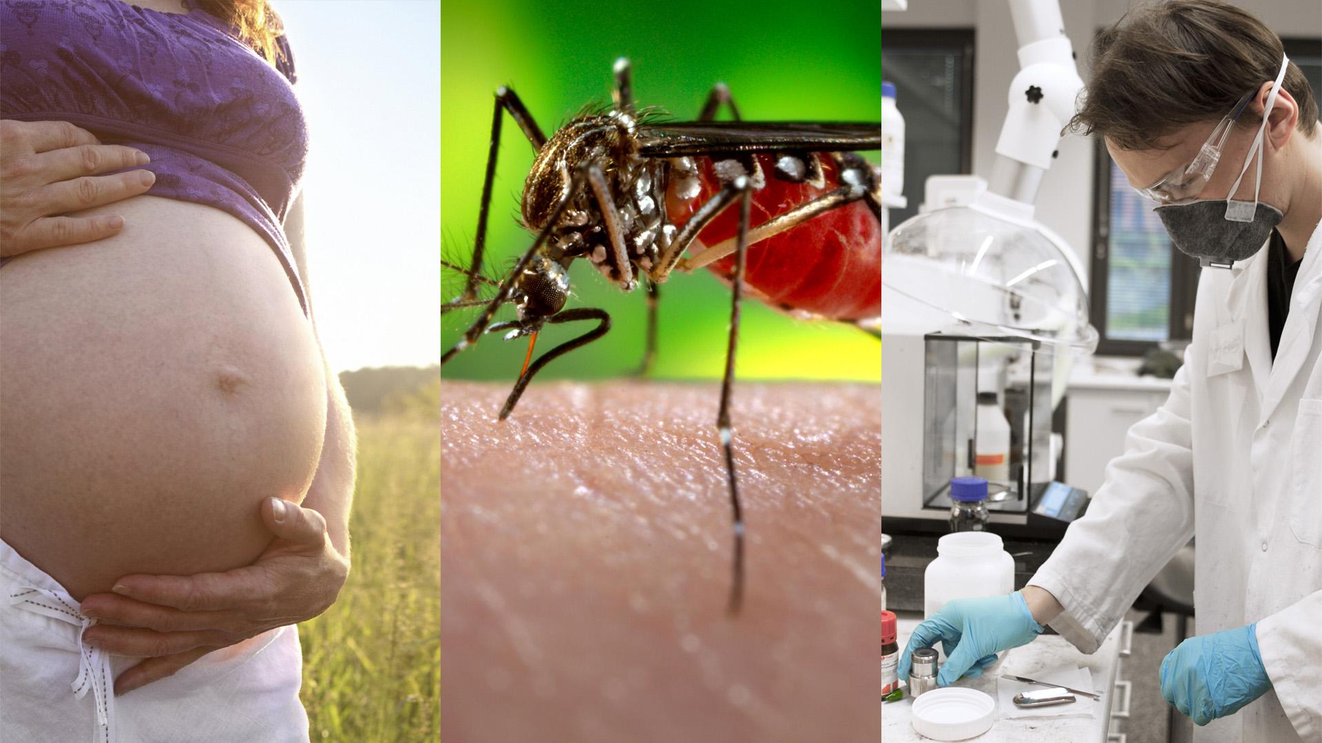 Sei preoccupato per Zika?   Il team Biologic ti racconta quello che dovresti sapere.   Scopri di più