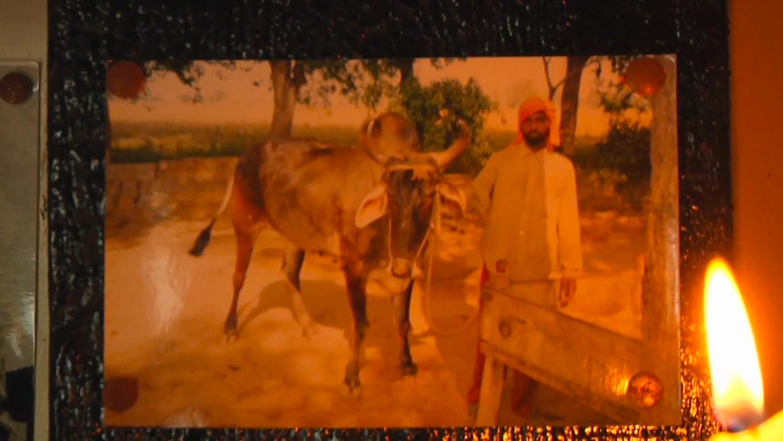 Copy of Punjab Gardens