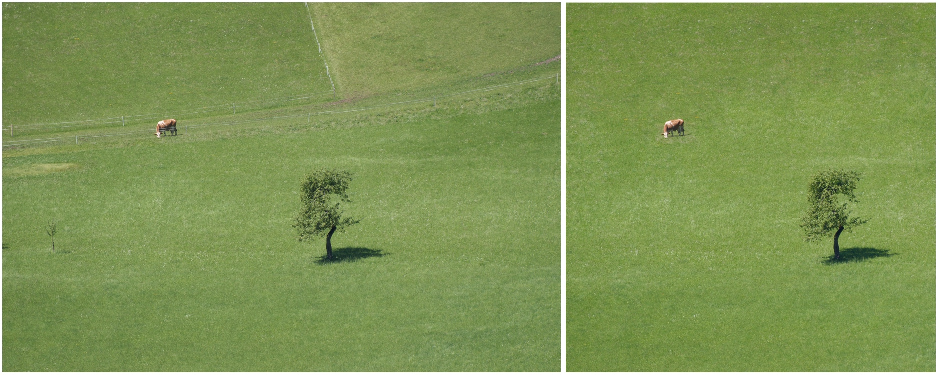 a-cow-and-a-tree-pixelmator-healing-brush-before-and-after.jpg