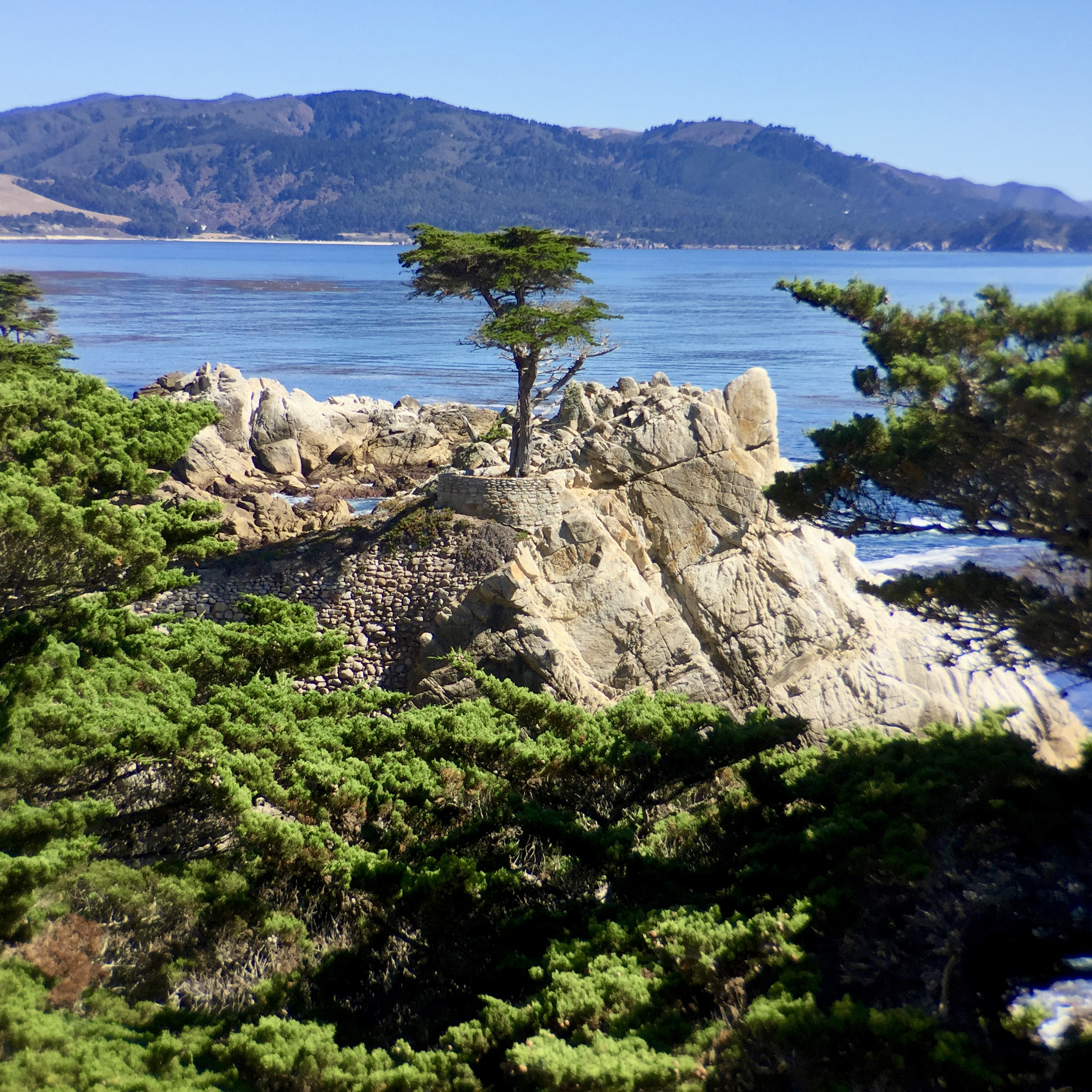 The lone cypress at the 17 mile drive; (cc) by-nc squics.com