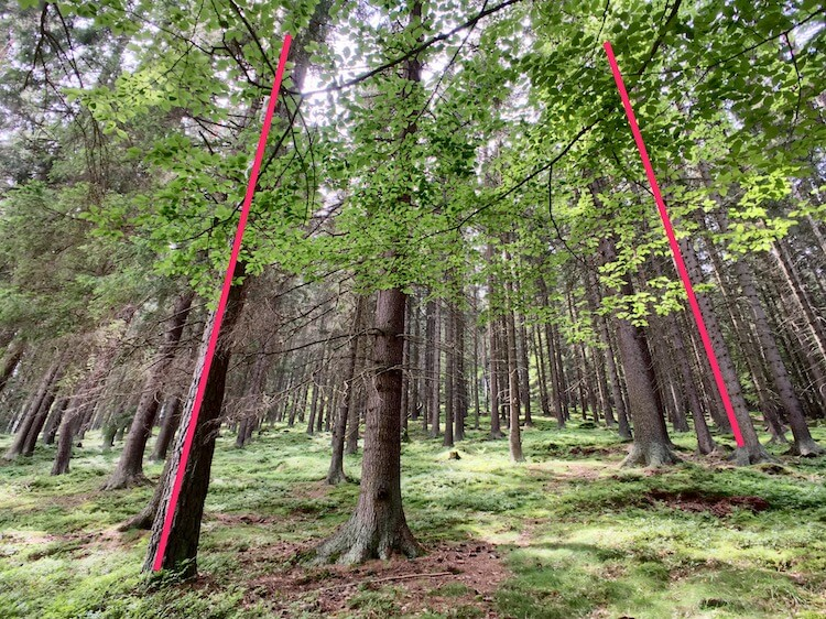Perspective distortion (red lines) in a forest.