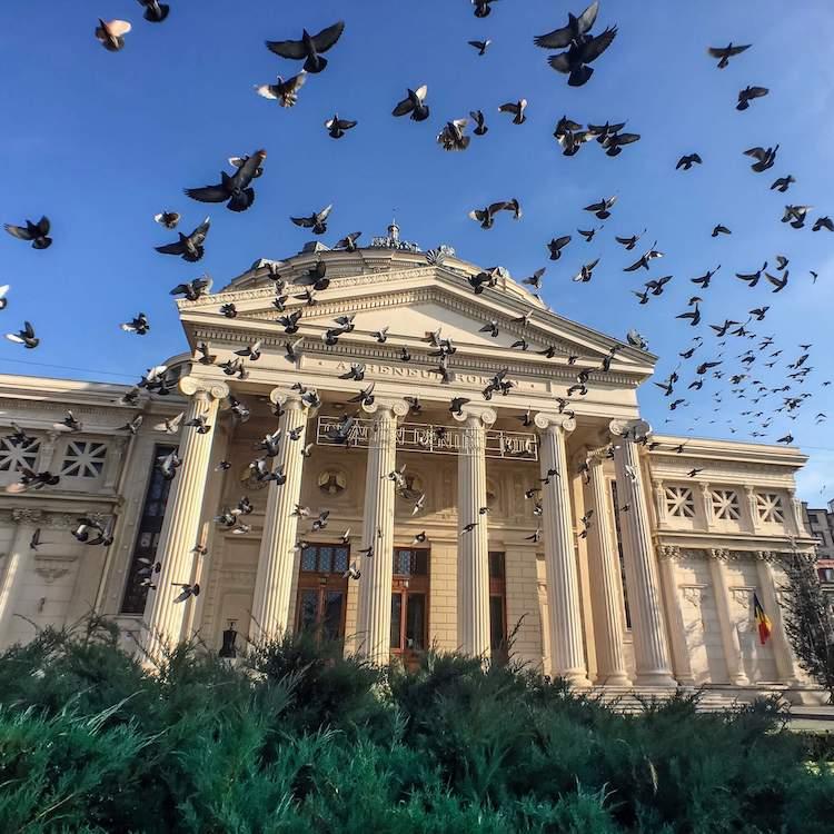 Pigeon Swarm at the Ateneul Român in Bucharest, Romania
