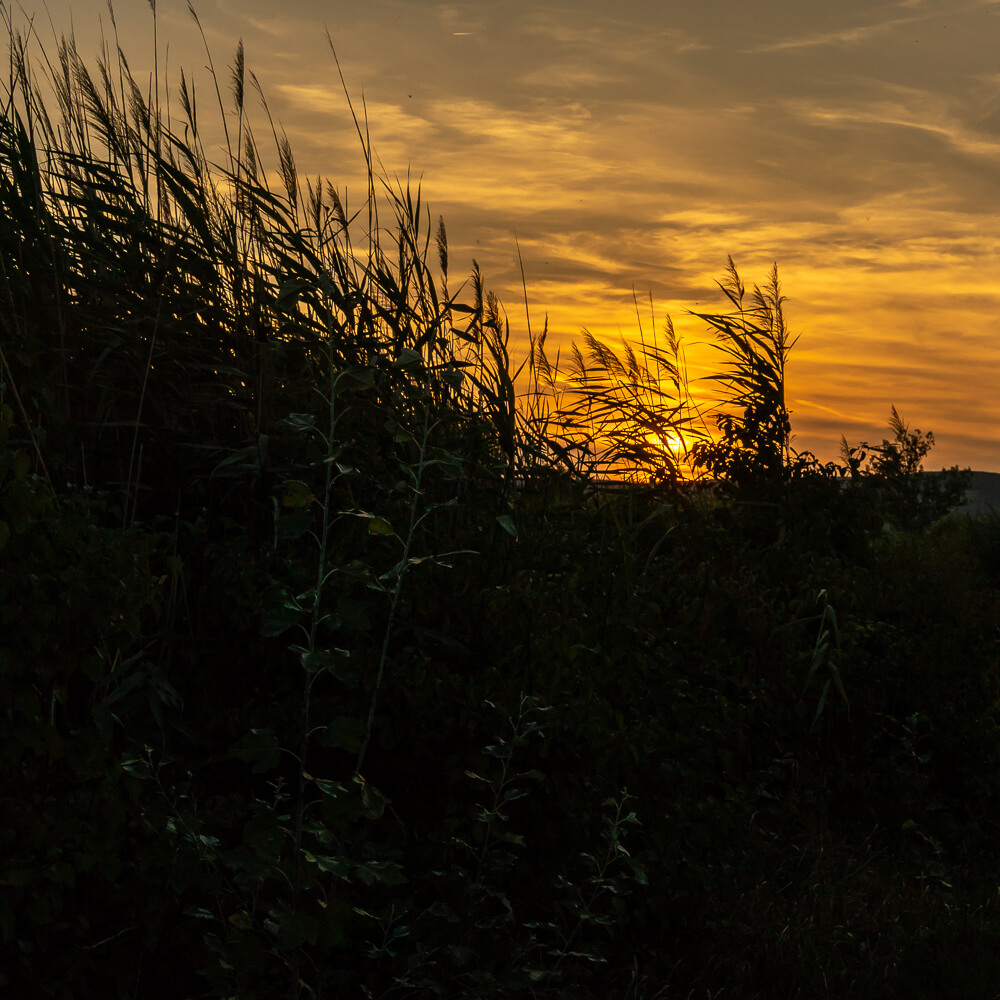 sunset-in-the-reed.jpg