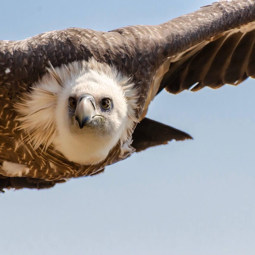 eye-to-eye-with-a-vulture.jpg