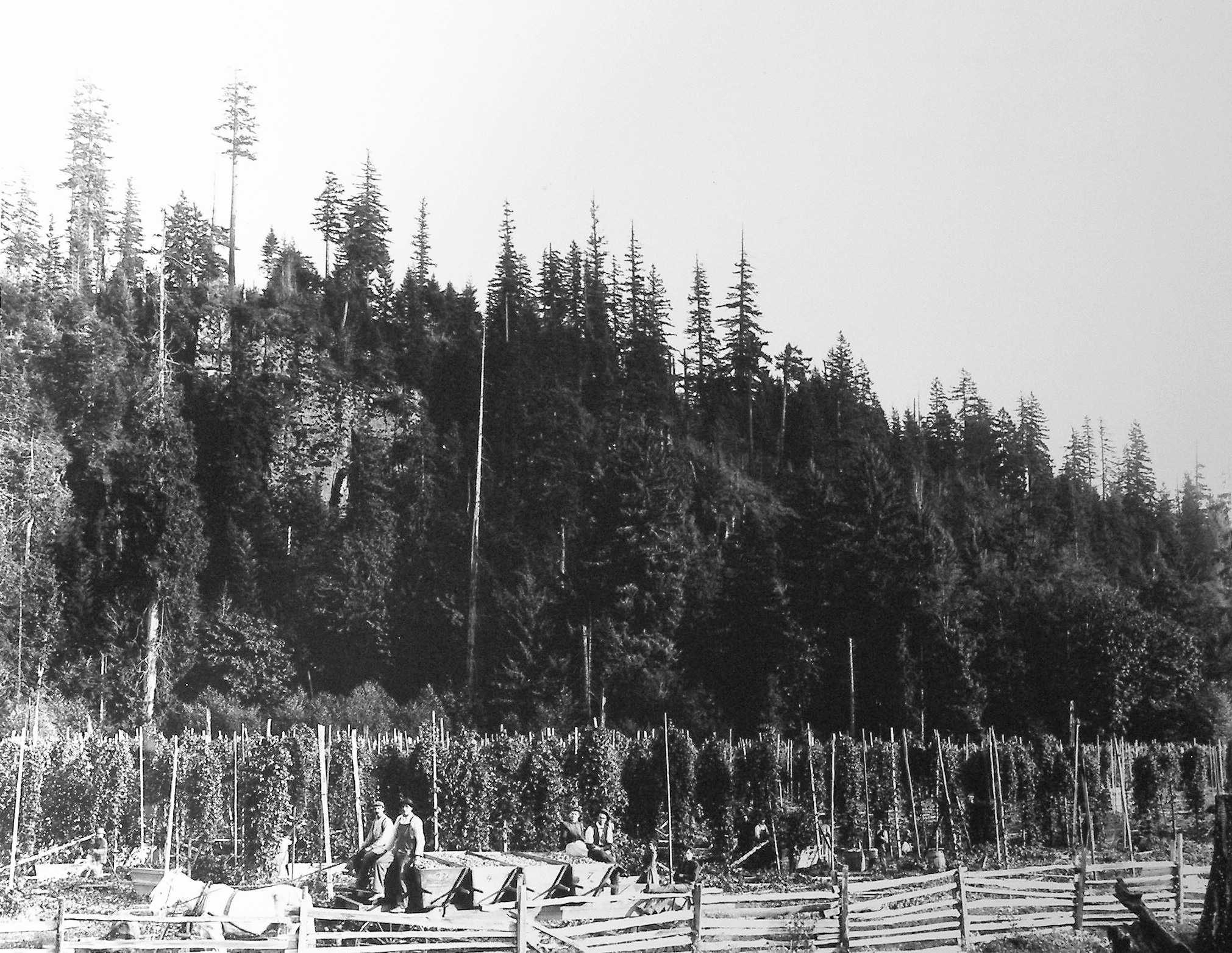 Henry Bruin's hop farm was located where the Enumclaw Golf Course now sits.
