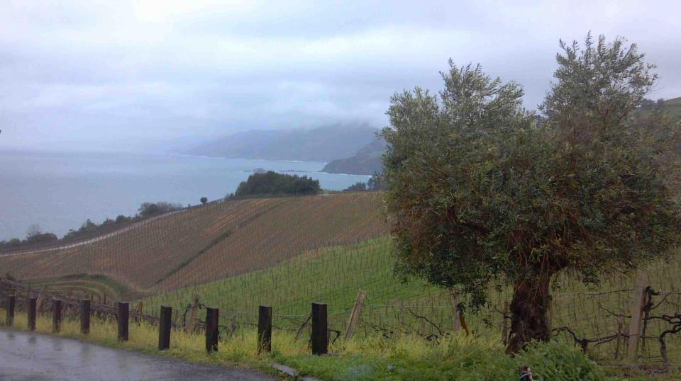 Vneyard in the Basque Region of France
