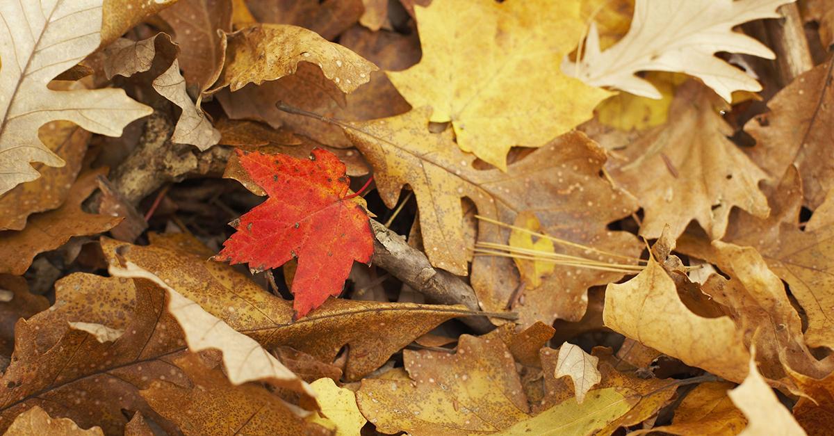 leaves-facebook.jpg