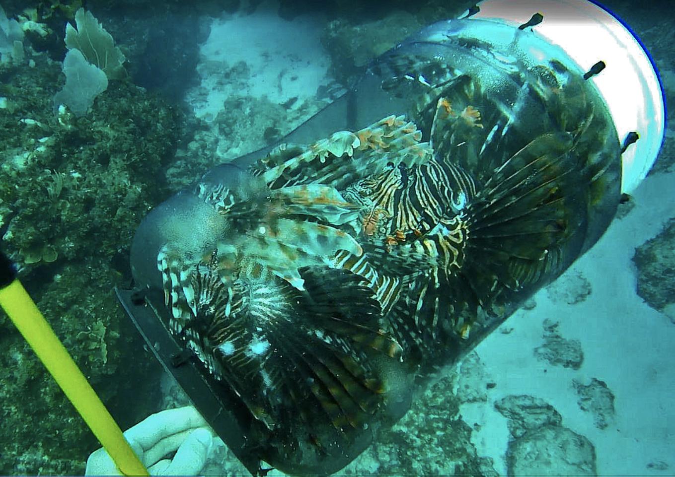Lionfish Containment Unit -