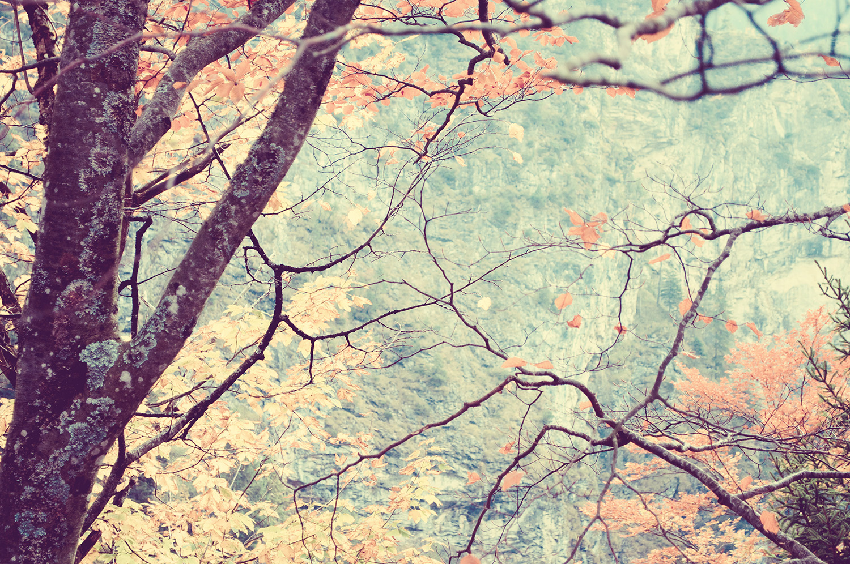 nelougrace_branched_window.jpg