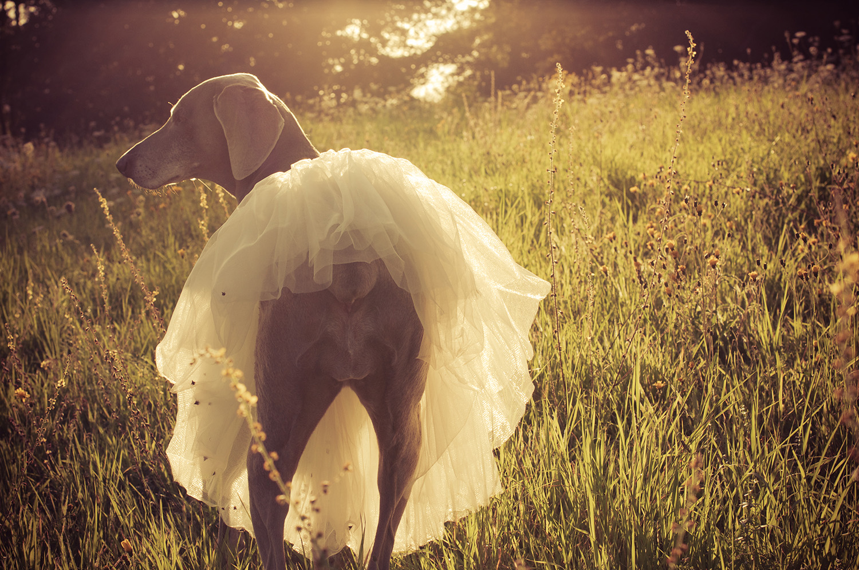 nelougrace_sunkissed_ballerina.jpg
