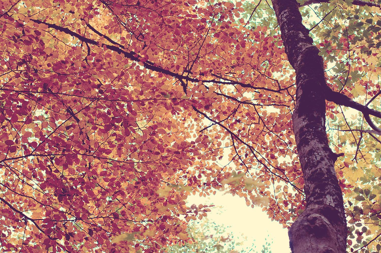 nelougrace_leaves_of_change.jpg