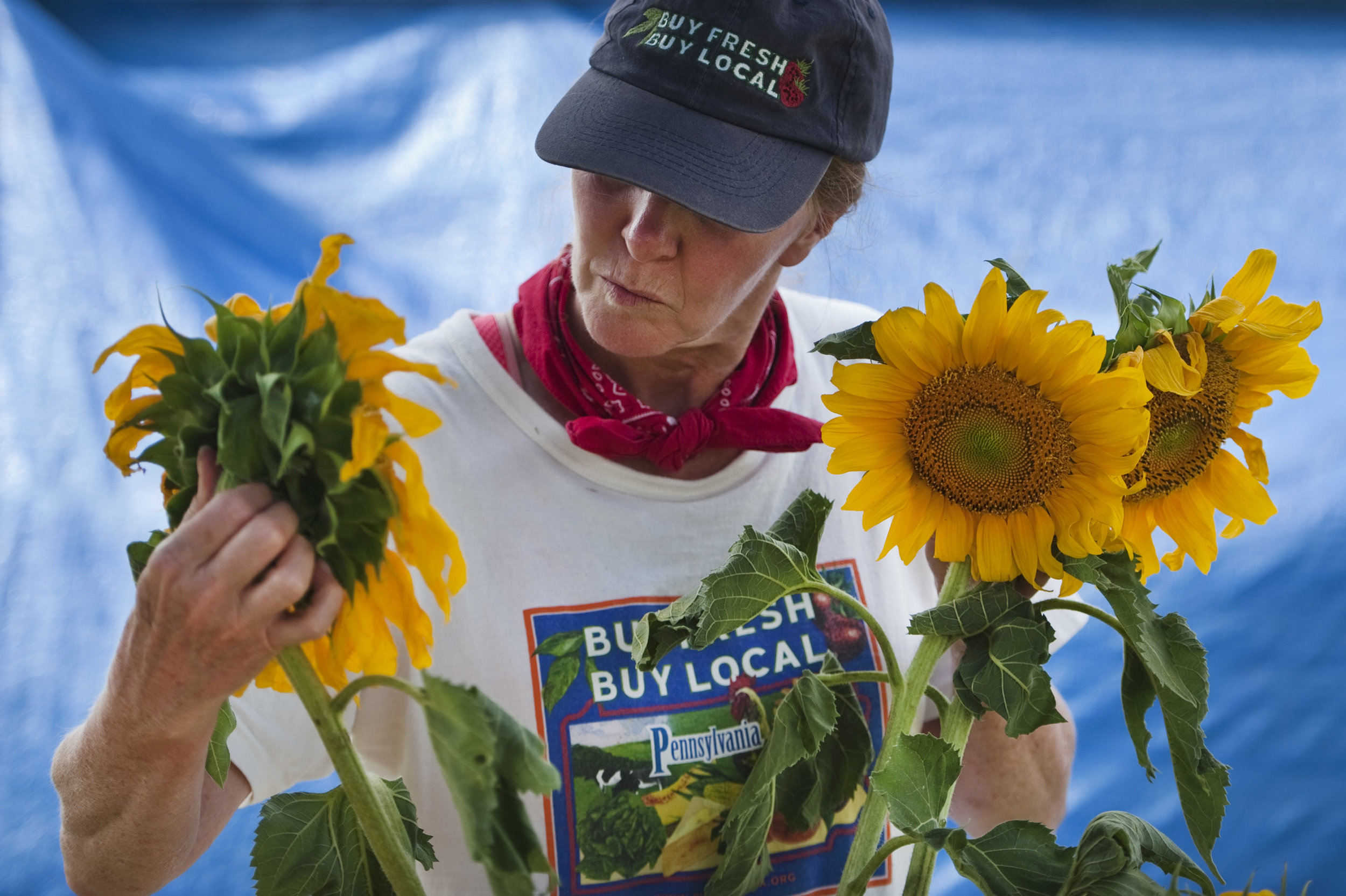 Deborah Goeller of Morris Farm in Irwin places her sunflowers in a container during the Murrysville Farmer's Market on Thursday, July 21, 2016.