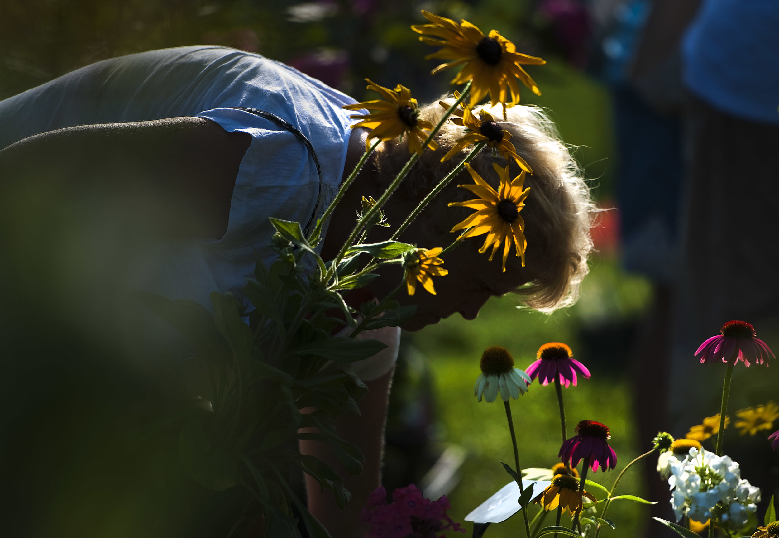 Carol Visnovsky of Johnstown selects a black-eyed susan while shopping the Lamb's Ear Farm booth during the Ligonier Country Market on Saturday, Aug. 20, 2016.