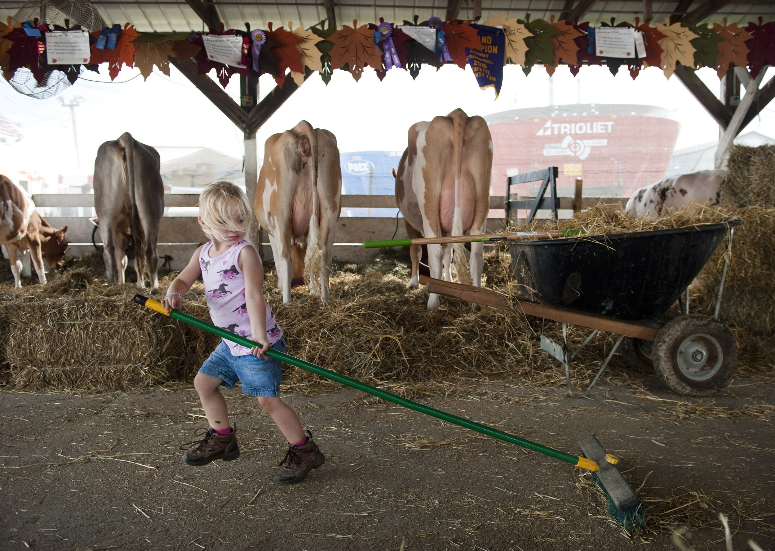 Clara Baker, 2 of Scottdale, helps her mother Vickie (not pictured) sweep the aisle of her family's Maple Bottom Farm stalls on at the Fayette County Fair Thursday, Aug. 4, 2016 near Dunbar.