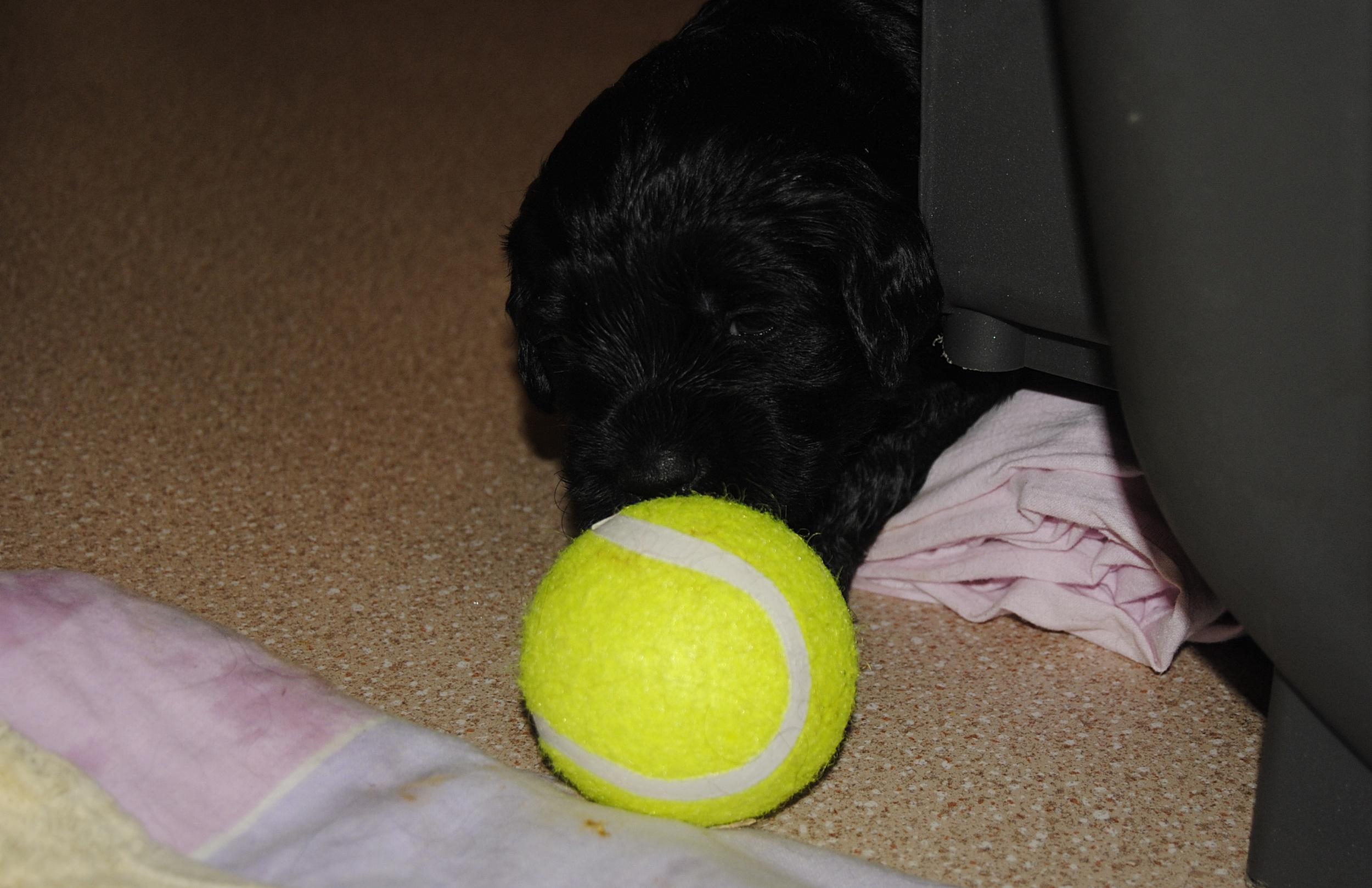 Herr Mörkblå tyckte det var spännande med bollen