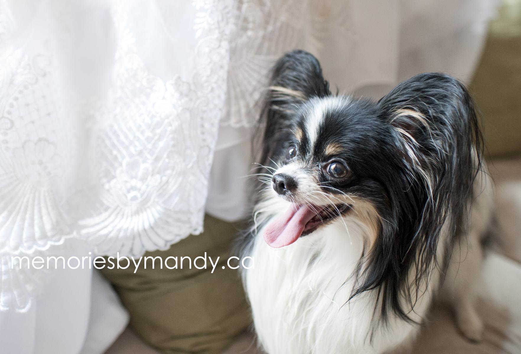 Saskatoon wedding photographer (16).jpg