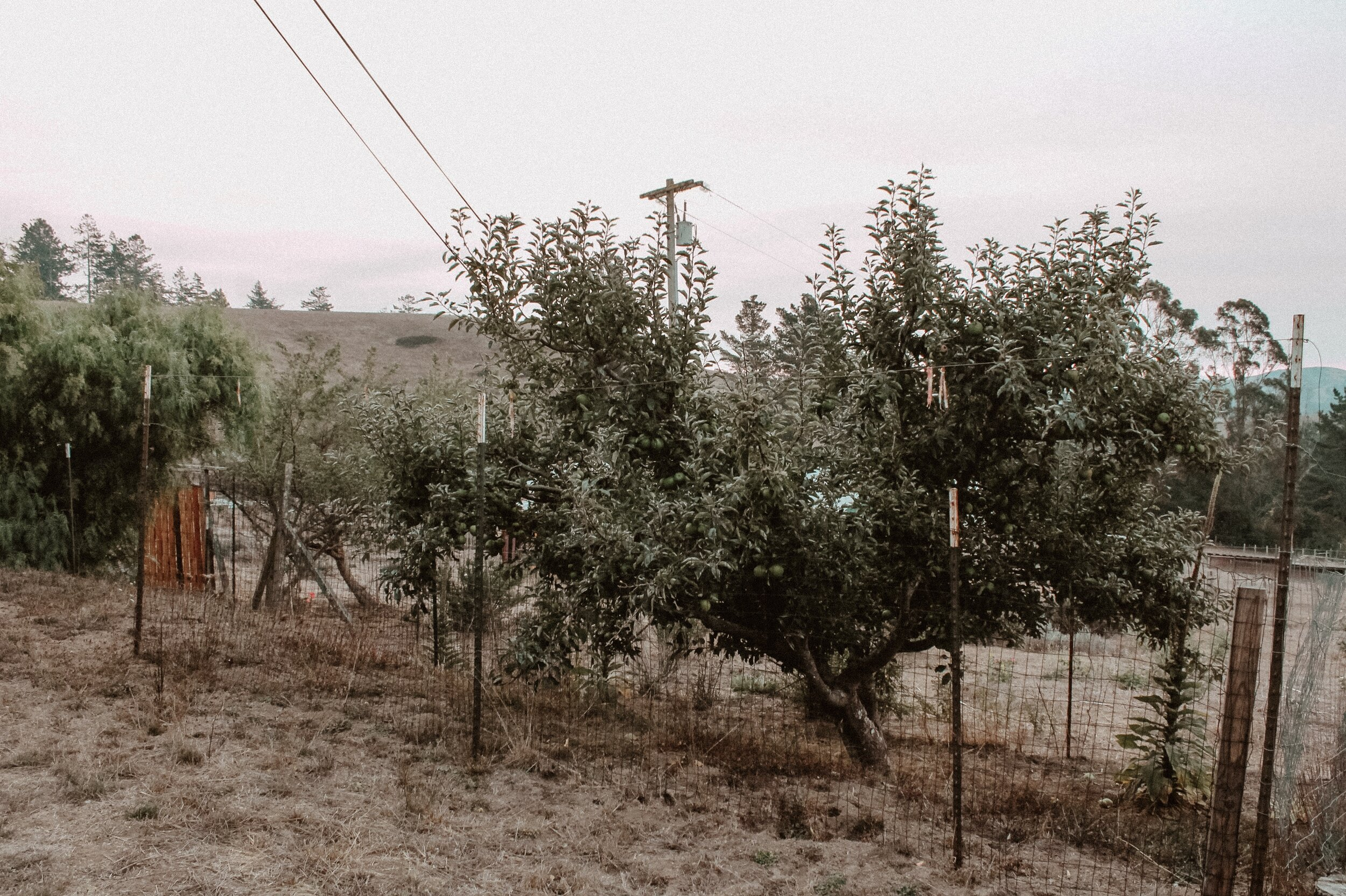 Farm Life and The Apple Tree Trimer1