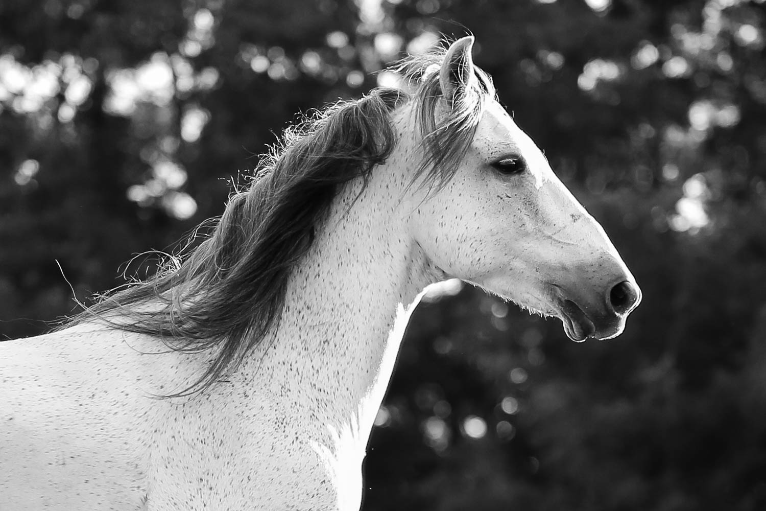 equine portrait with azteca horse at double H stables in stillwater