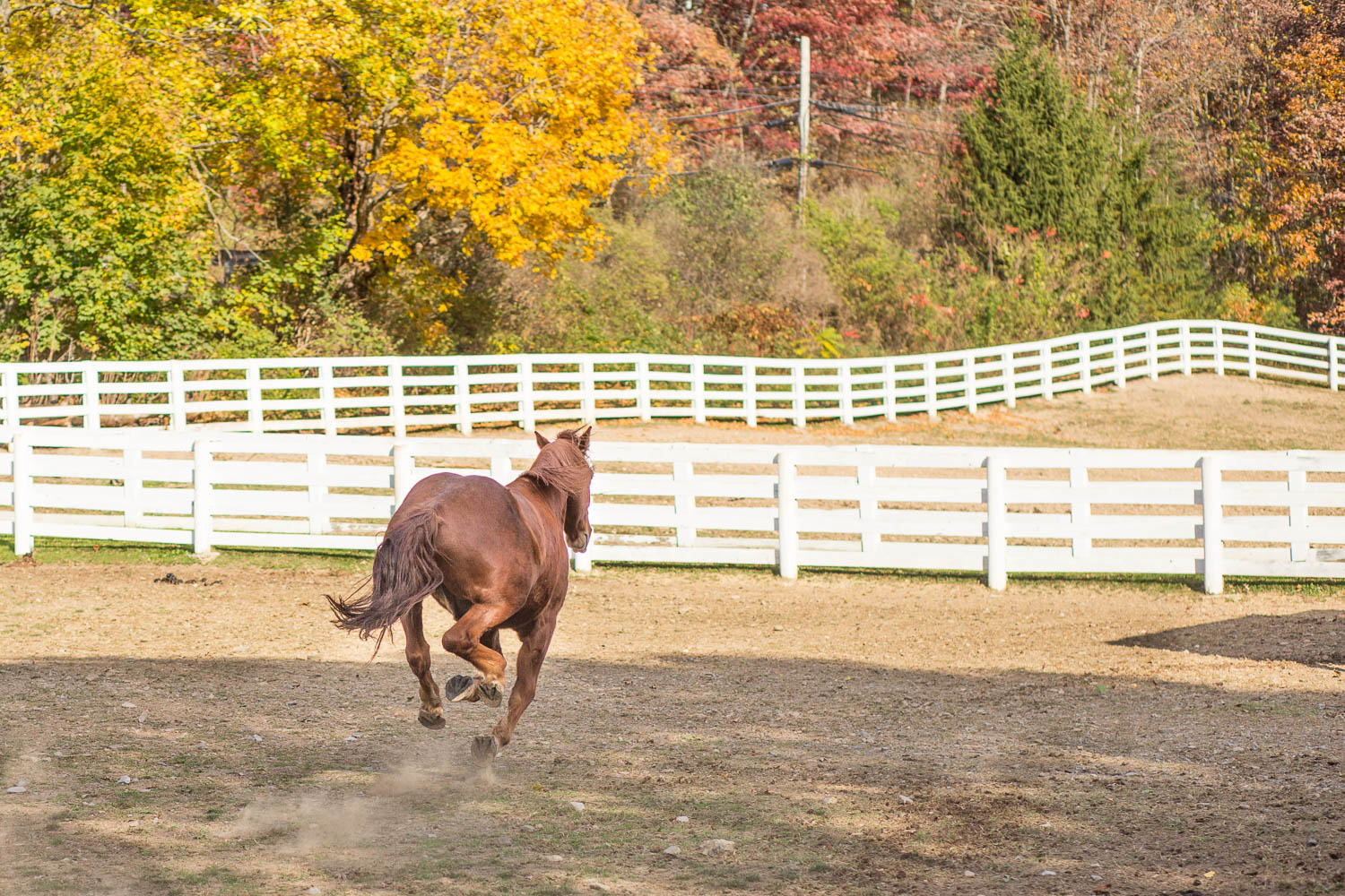 Horse photography at stables at the greenbrier west virginia