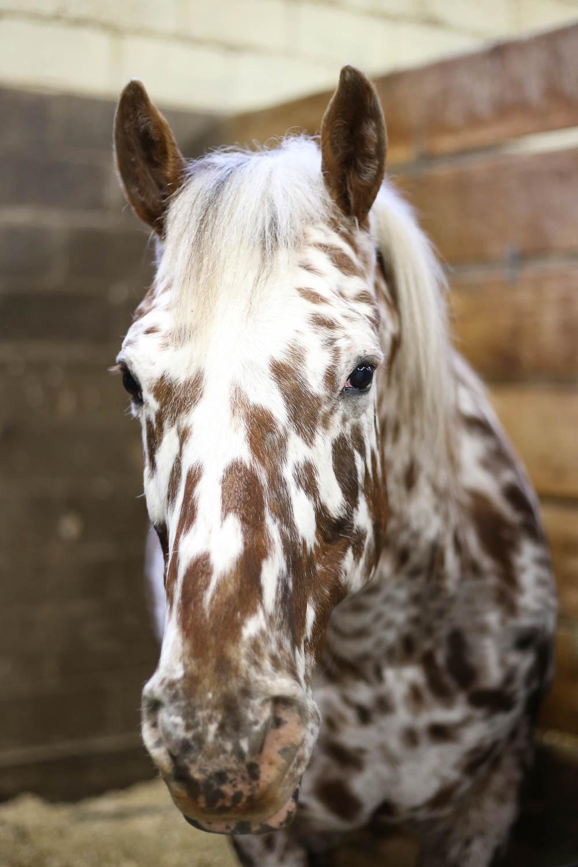 horse at minnesota state fair