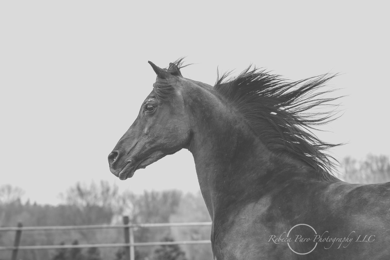 Minnesota horse photographer-32.jpg