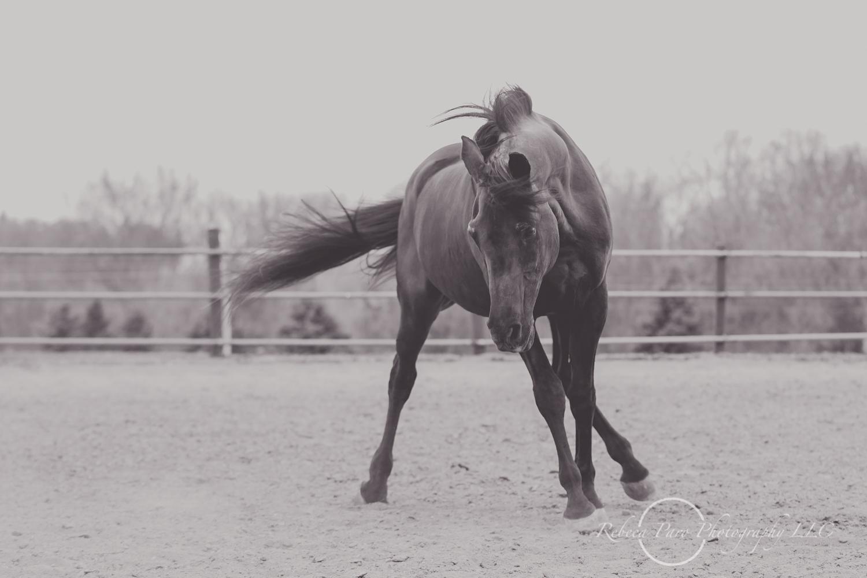 Minnesota horse photographer-38.jpg