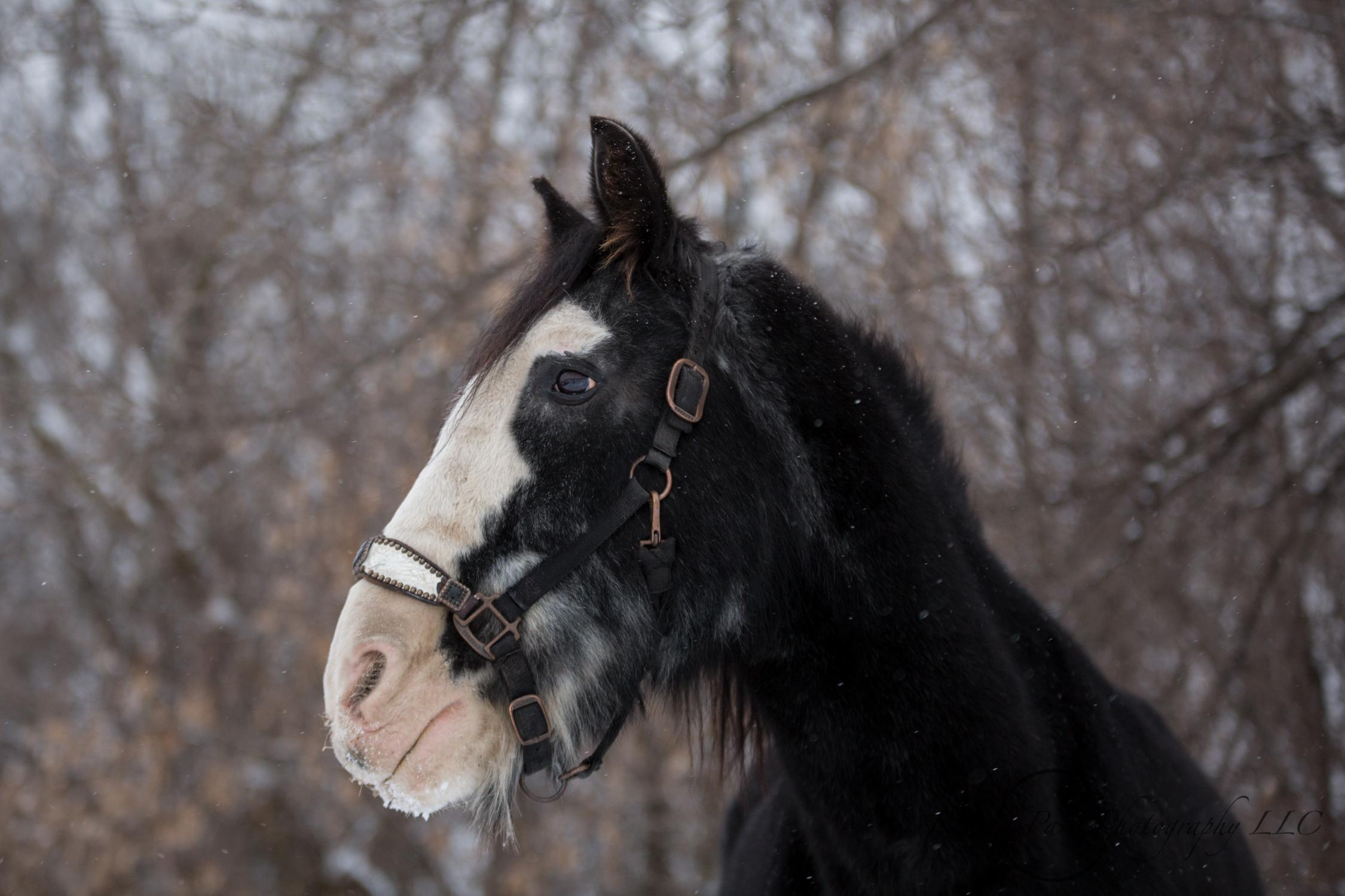 Minnesota Horse Photography