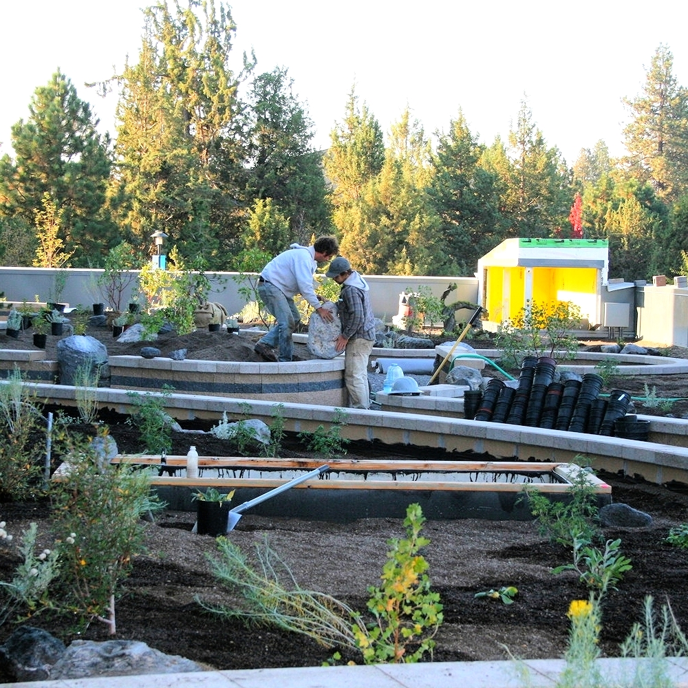 MODA green roof under construction.  This experimental project is the first completely native plant green roof in the country.