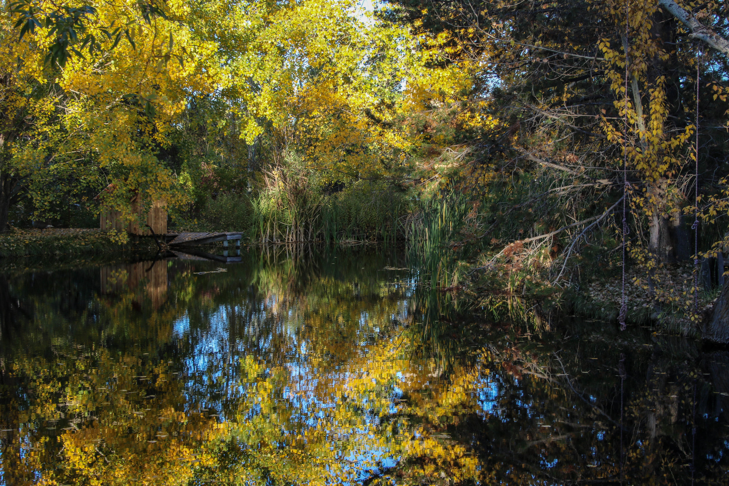 The nursery irrigation pond; Autumn 2016