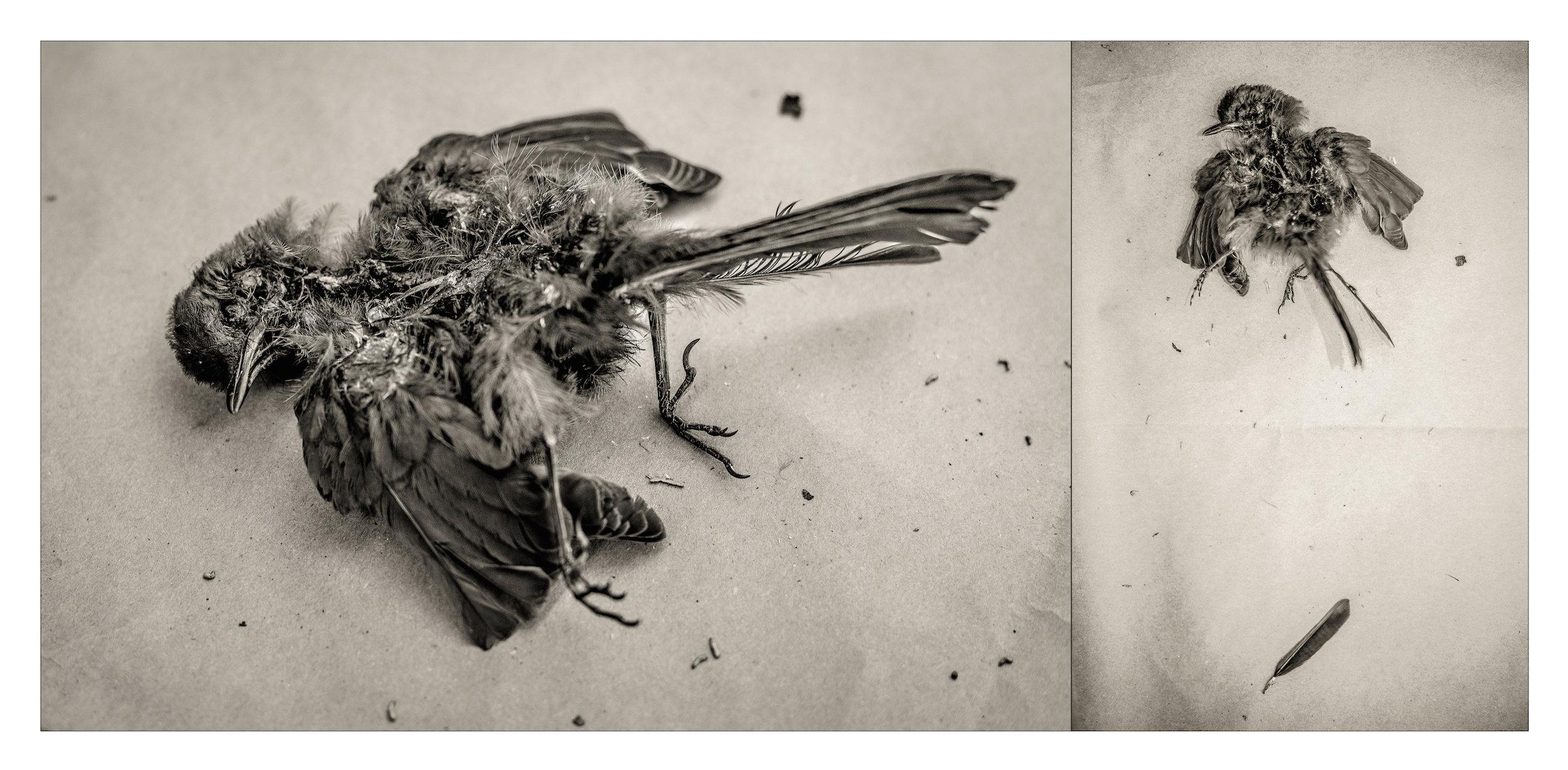 Decaying Bird copy.jpg