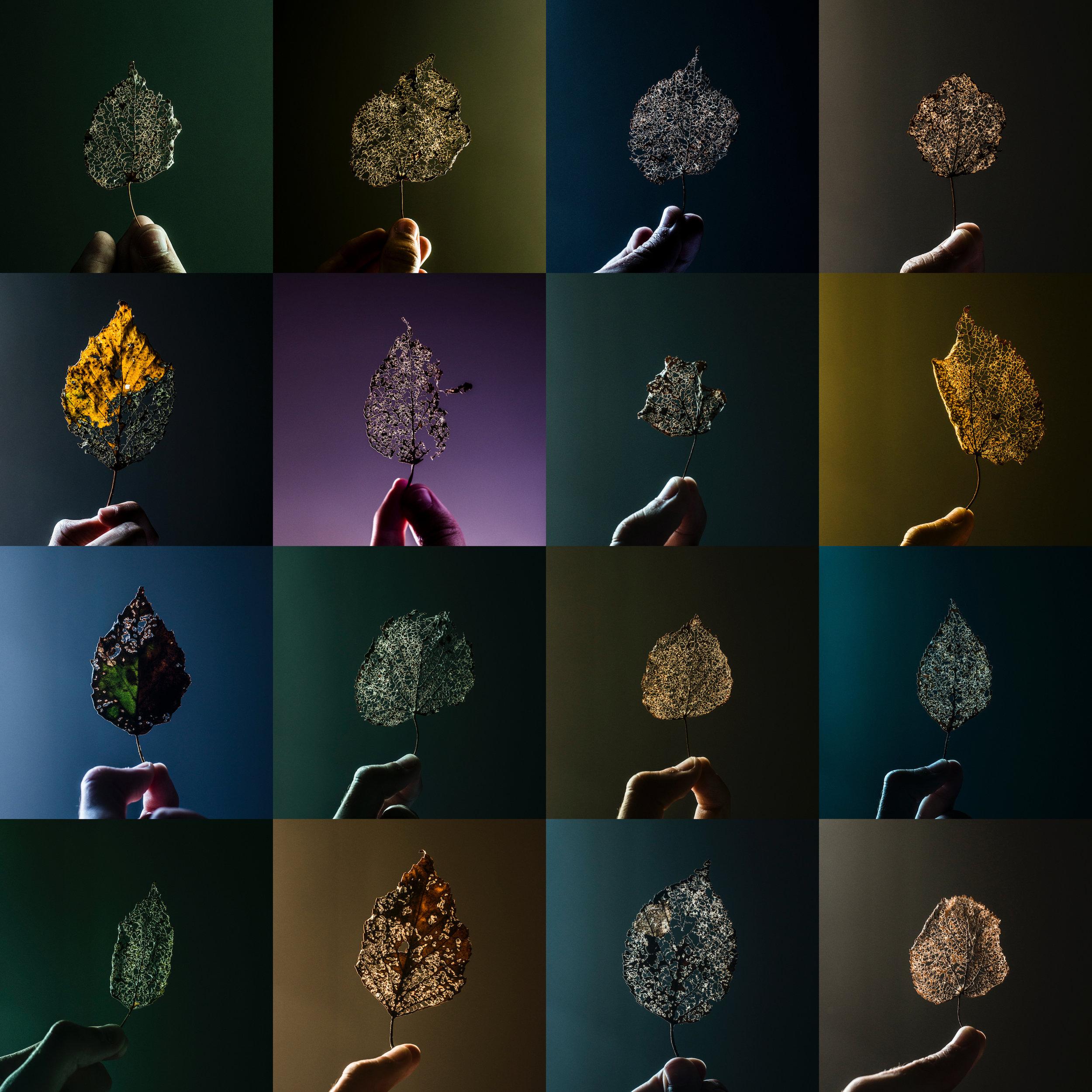 Leaves copy.jpg