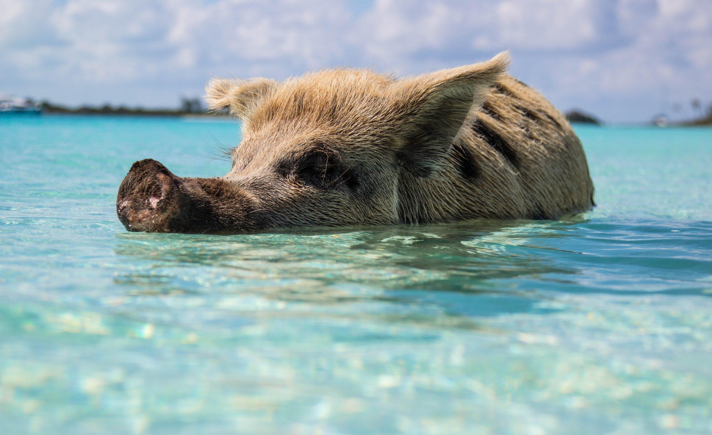 Bahamas (Nassau) - Peak Season: Dec-AprVibe: #Beach #Rest&Relaxation #Adventure #ResortCOMING SOON!