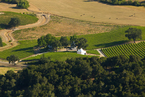 winery-wedding-yellow-color-palette-mike-larson-1a.jpg