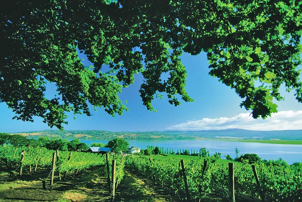 Ninth-Island-Vineyard.jpg