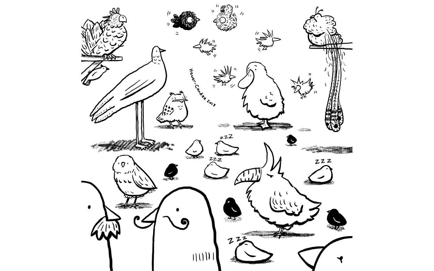 05 birds.png