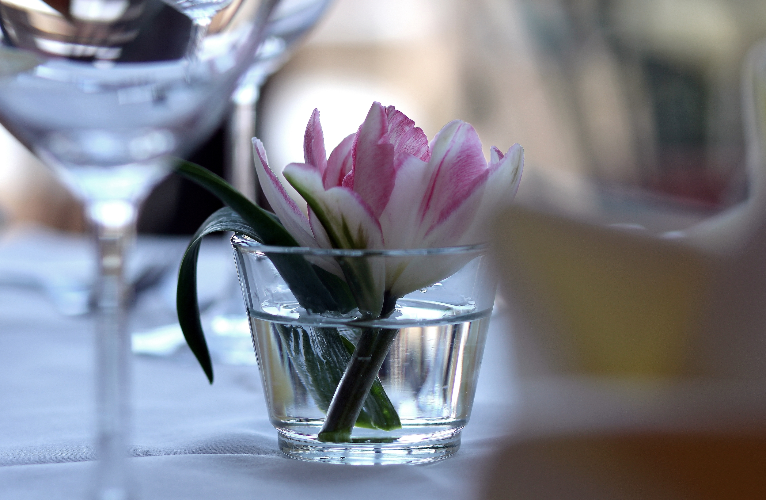 Intro Vase nah.JPG
