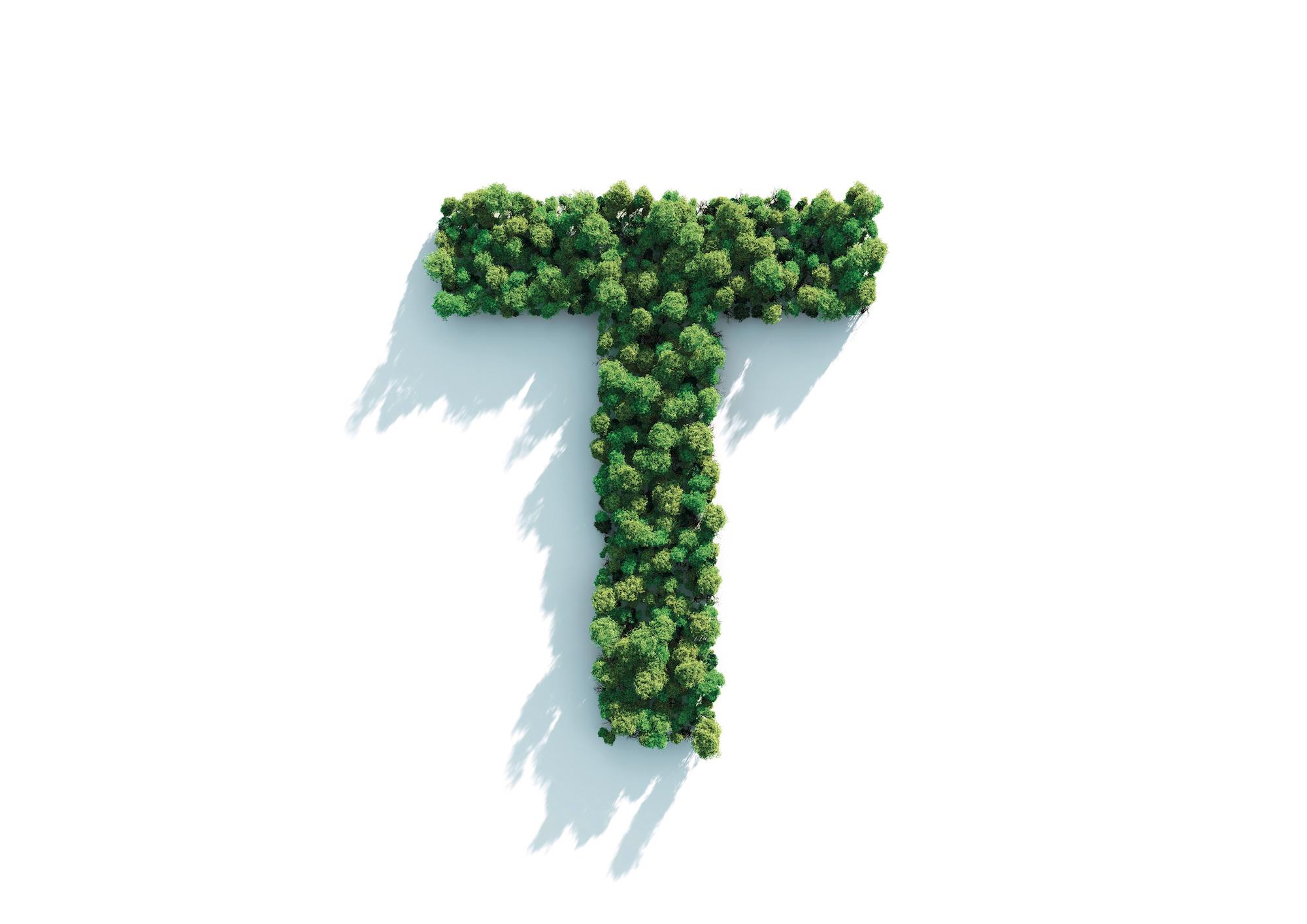 Tree T.jpg