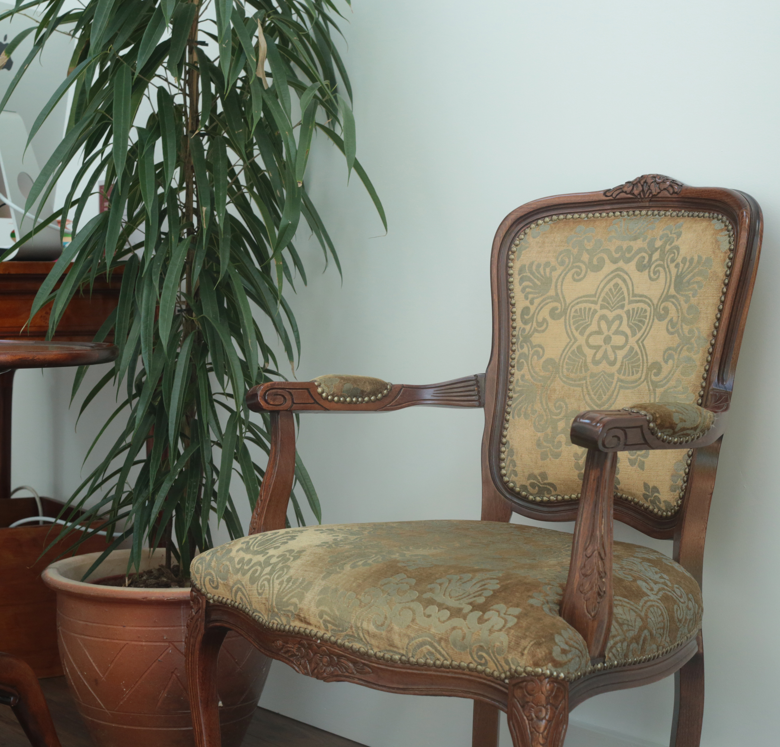 chair and plant.jpg