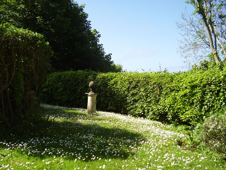 Daises in the lawn at Welcombe Coastal Barn