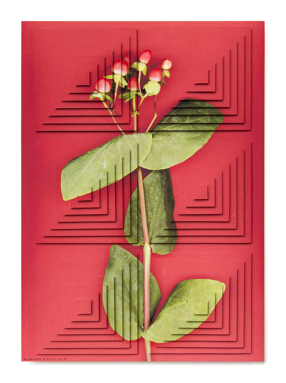 ziggurat fiori DR6.jpg