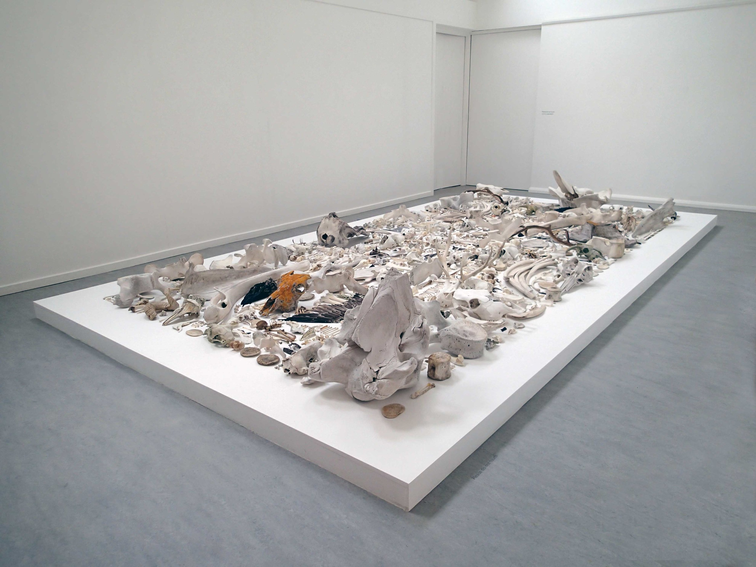 Biomass (NU20072014),     2015  Faunal remains arrayed on 3.5m x 5.79m x 20cm plinth.              Commissioned for   Broad Reach   an -  ATLAS Arts  project,   Taigh Chearsabhagh Museum & Art Centre, March, 2015.  Drawing inspiration from the natural world, particularly the phenomenal experience of landscape, much of my work originates from regular, solitary walks in wild and borderland places. Maintaining an open relationship to location and materials, a process of slowed down, engaged looking is echoed in the creative methodology and realisation of drawings, object arrays and photographs.  Composed from a diverse collection of faunal remains gathered on Uist across a seven-year period,  Biomass (NU20072014)  bears witness to this on-going temporal relationship. Undeniably an expression of my profound fascination with nature, the work also seeks to articulate a search for meaning through commonality, rather than hierarchy.  Consisting primarily of the hard parts of the body such as skulls, bones and teeth, the array here offers no system for interpretation or scientific analysis. Rather, their material actuality invites the viewer to consider all in relation, one to another and to the spectator.  Images © Sophie Morrish 2015