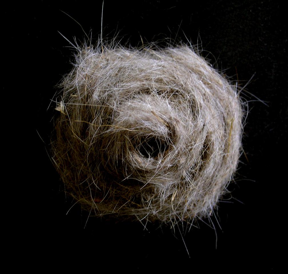 Spiral    Cast dog hair, 2004
